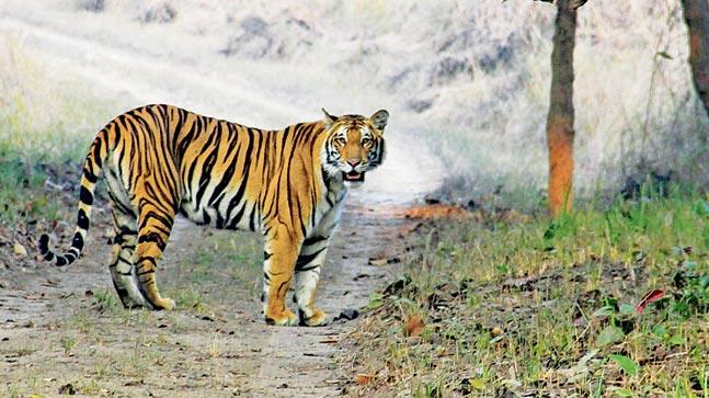 Dudhwa National Park - Wildlife