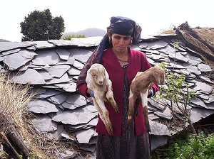 Some families also built farms for goat rearing.