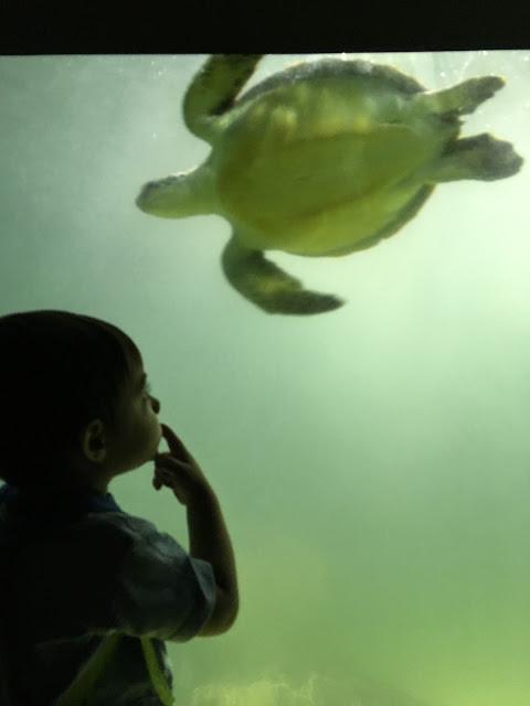 santos aquário