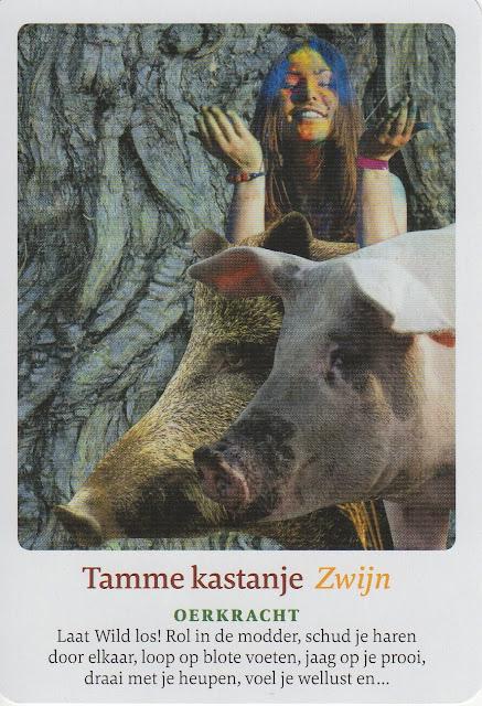 Orakelkaart voor week 46: Tamme Kastanje - Zwijn - Oerkracht