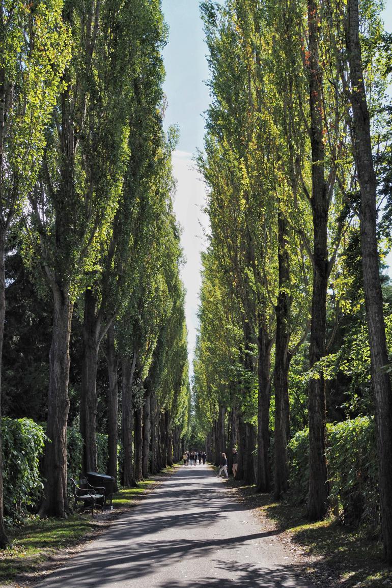 Cimetière et parc d'Assistens Kirkegård à Copenhague