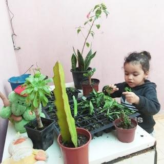 عنوان الصورة: للنباتات هواة من فئة الصغار