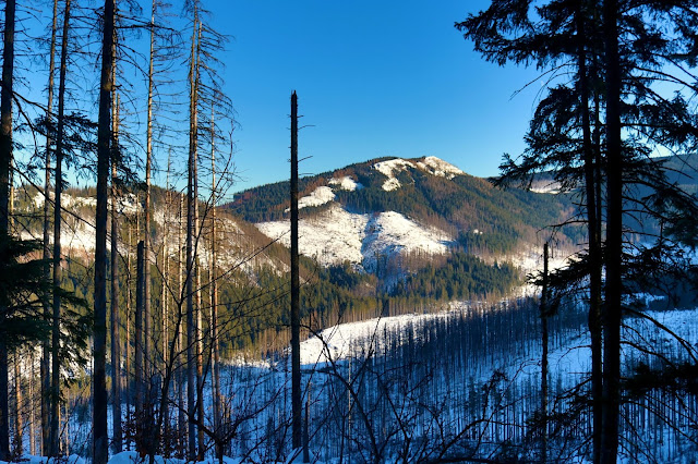 Panorama z Nosalowej Przełęczy na Kopieniec Wielki