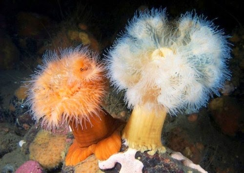 fotografia de flora submarina