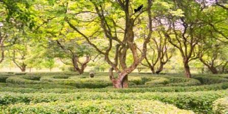taman buah mekarsari agustus 2014 taman buah mekarsari alamat taman wisata air mekarsari taman buah mekarsari