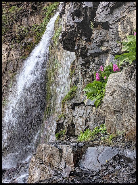 Amazing pink flowers next to the middle of the 3 falls in the cove area of Scout Falls.