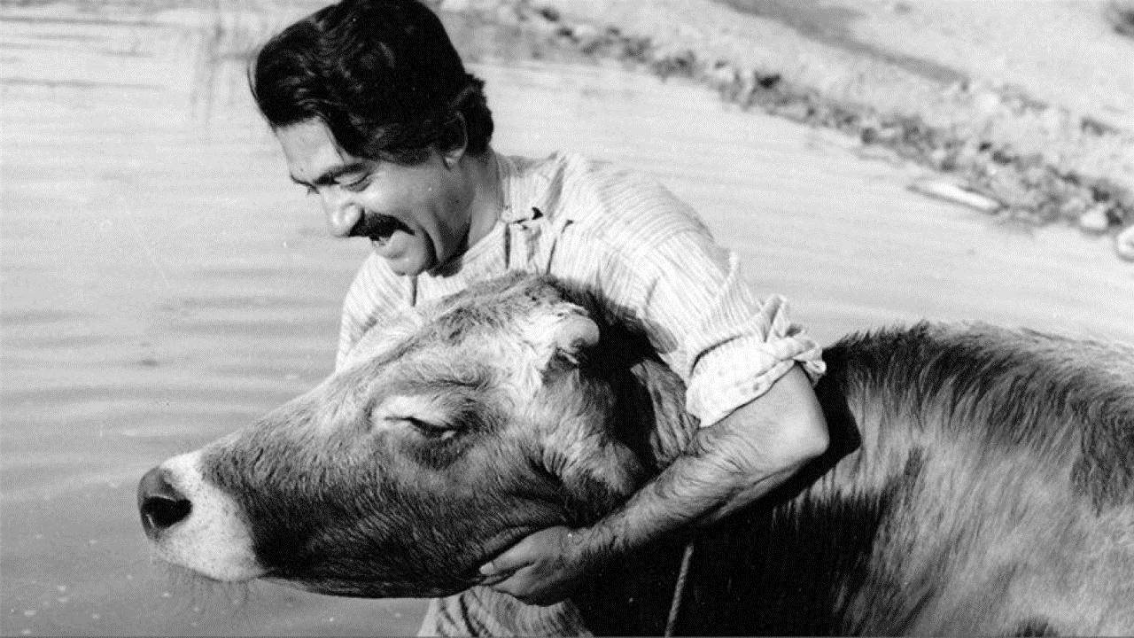 Cena de A Vaca, 1960 (Dariush Mehrjui)