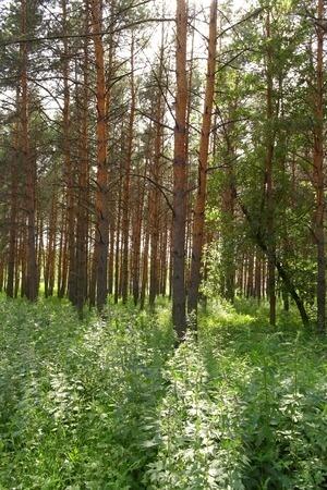 el bosque de los atletas se hara visible en tokio 2020