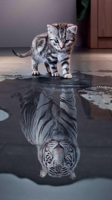 My future, kitten