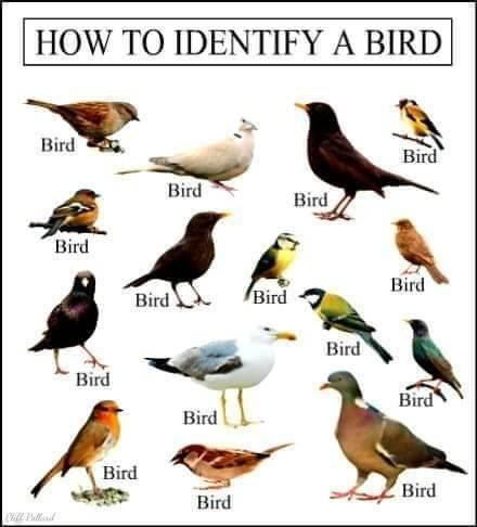 [Bird-infidel753]