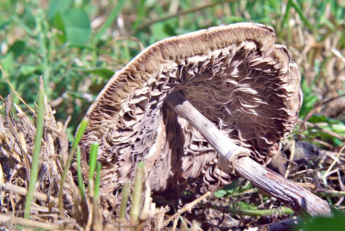 Bild der Woche #38 (KW38/2020) – Letzte Lebensphase eines Pilzes