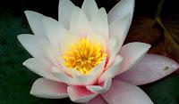 Dünyanın En güzel Çiçek Resimleri HD