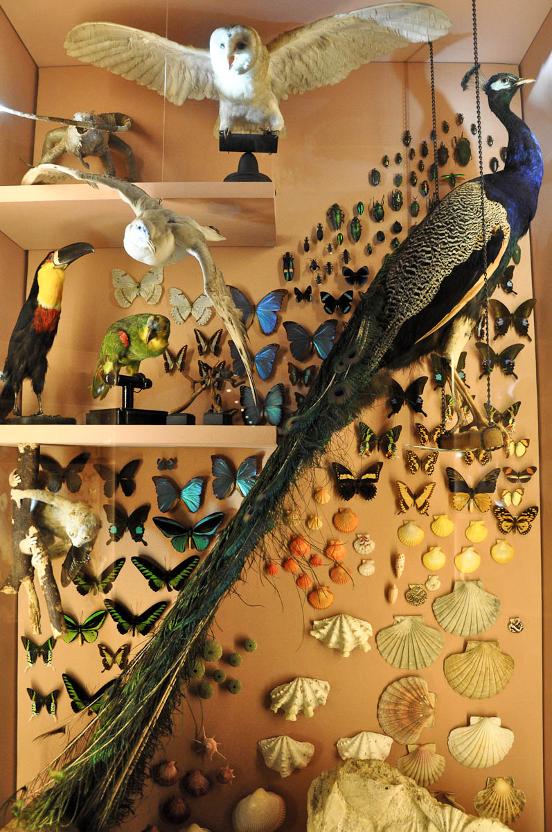 Display with stuffed birds and shells, Natural History Museum, Venice, Italy