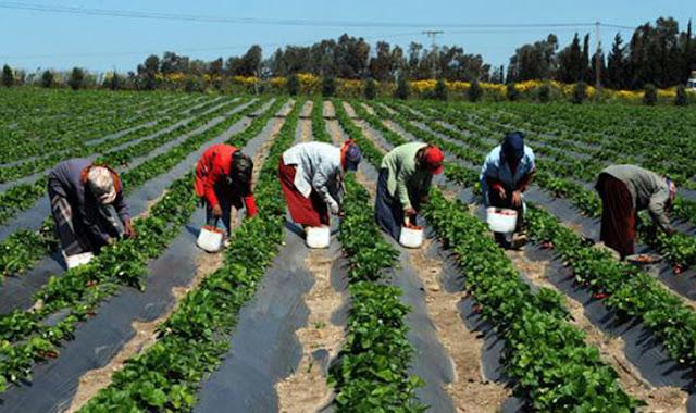 تشغيل 300 عامل وعاملة فلاحية بمدينة اشتوكة ـ آيت باها