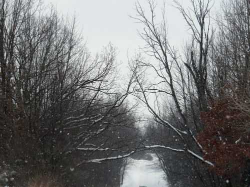 trees touching across road