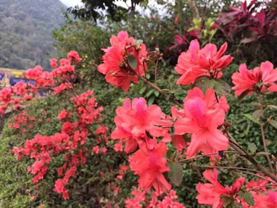 Những loài hoa vừa lạ vừa quen bạn đoán đc mấy loại?