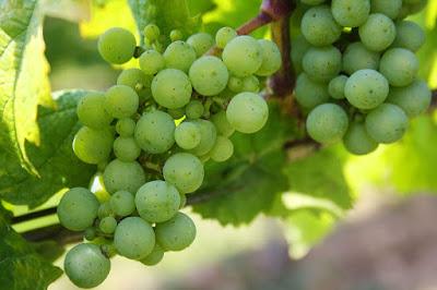 cara menghilangkan flek hitam alami dan cepat dengan buah anggur