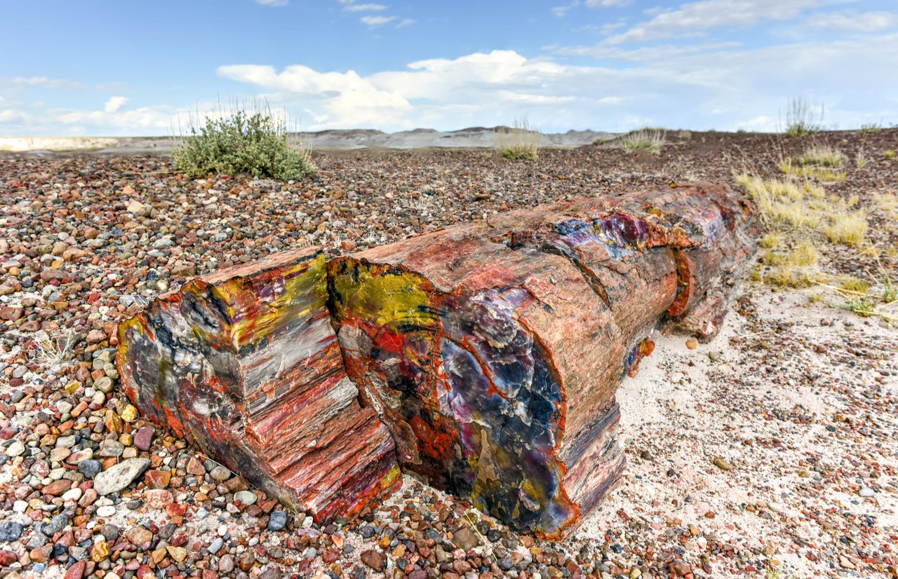 Petrified Forest National Park Navajo and Apache County
