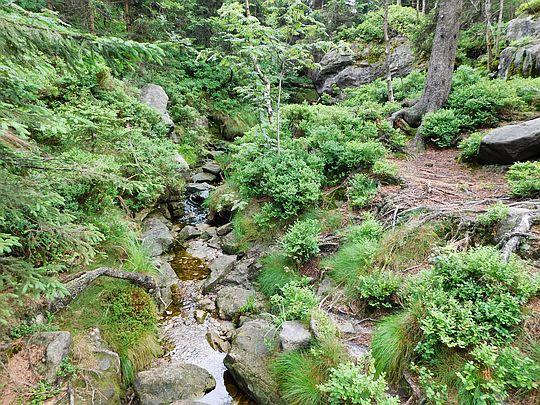 Źródlisko potoku.