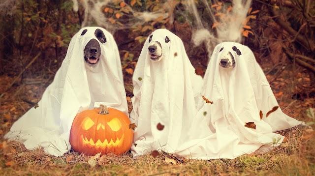 Halloween DOG Costumes 2021 | Halloween 2021 in Germany | Halloween 2021 Images