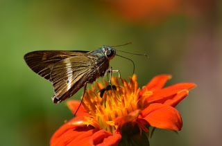 paisaje-mariposa-complemento-en-fotografias