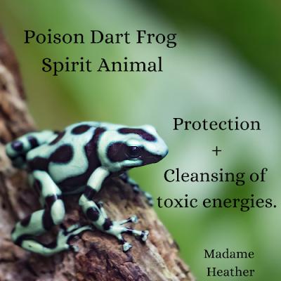 Poison dart frog medicine