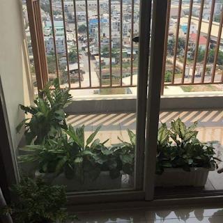 view ban công chung cư vision 2 phòng ngủ bình tân