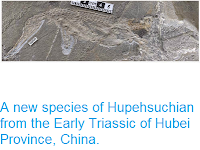 http://sciencythoughts.blogspot.co.uk/2014/12/a-new-species-of-hupehsuchian-from.html