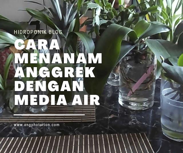 Cara Menanam Anggrek dengan Media Air