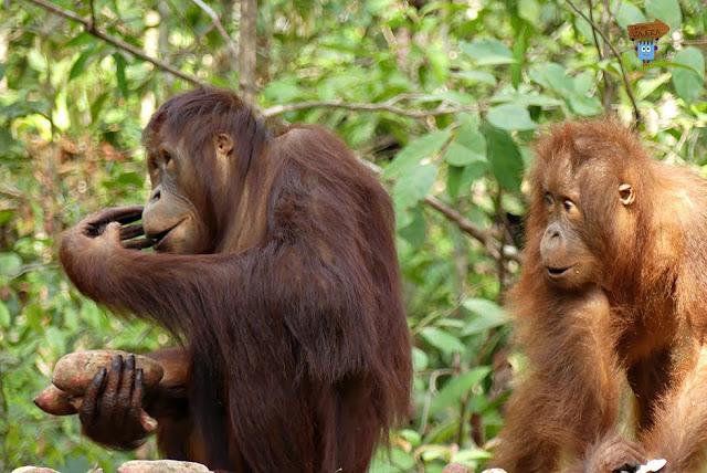 Borneo - Indonesia