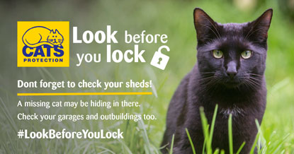 Cats Protection Look Before You Lock