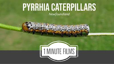 Caterpillar Stock Video