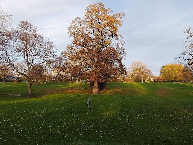 Looking up at the trees at Monkton Park golf course