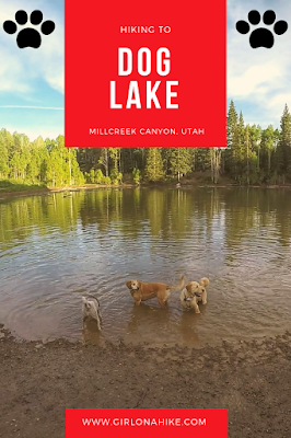 Hiking to Dog Lake, Millcreek Canyon, Utah, Hiking in Utah with Dogs
