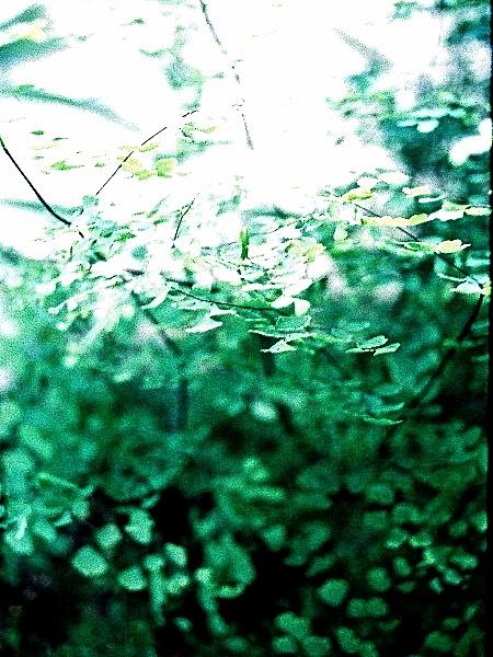 In the Garden 03