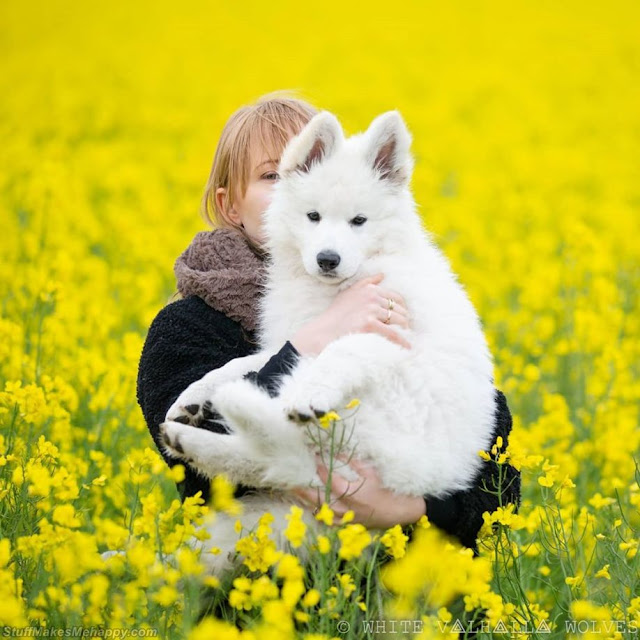 Puppy White Shepherd Dogs Images