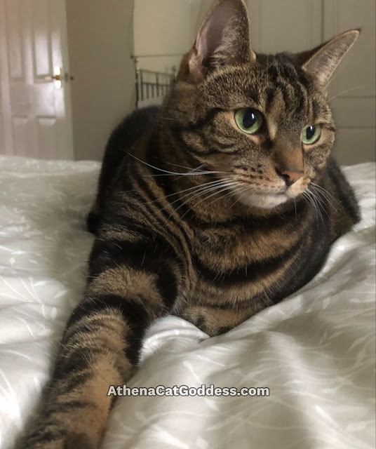 tabby cat with stretched out paw