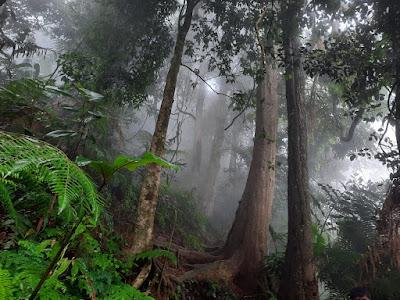 Hutan Gunung Sangggabuana yang Epic