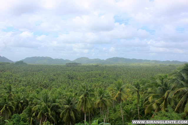 The Coconut Plantation Siargao