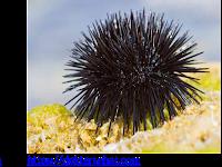 10 Soal Uraian dan Kunci Jawaban Materi Kingdom Animalia-Biologi Kelas X Tahun Pelajaran 2020-2021