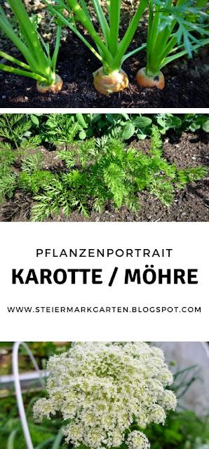 Karotte-Möhre-Pin-Steiermarkgarten