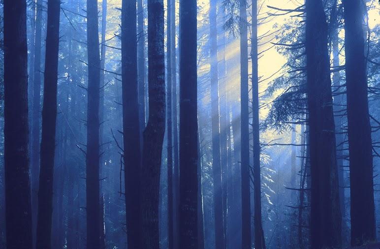 Sun Rise Behind Tree