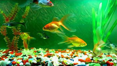 aquarium hd wallpaper for pc