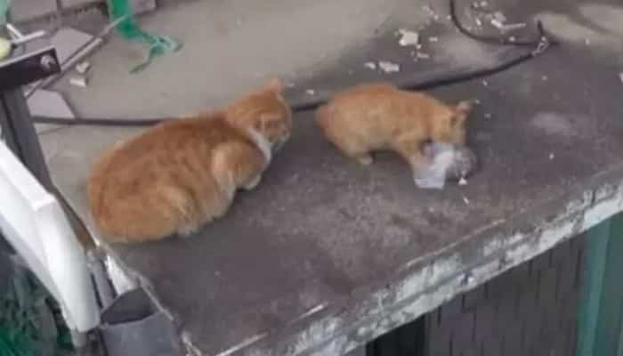The homeless cat just accepted food in bags,  the woman followed her and found a secret