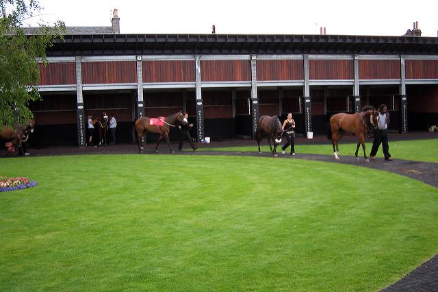 Photo montrant une écurie de course : pelouse vert et tondue court, box en fond et chevaux qui passent