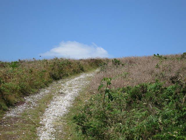 White, stony path between grass and bracken approaches top of hill.