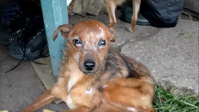 11 собак, живущих в ужасных условиях, спасли волонтеры в Литве