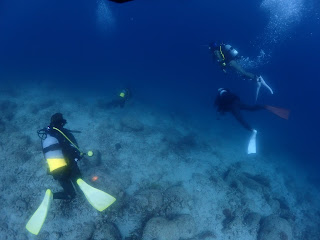 2021年5月10日の柏島ダイビング