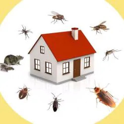 Best and Reasonable Pest Control Services in Thane