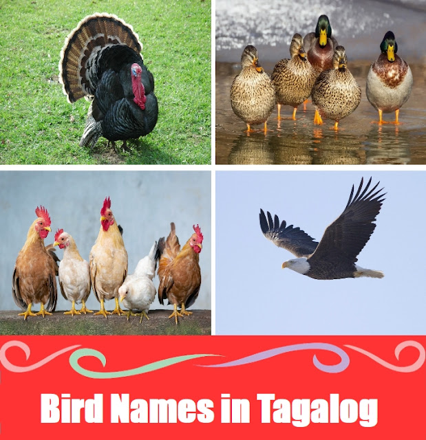 Birds Word List in Tagalog